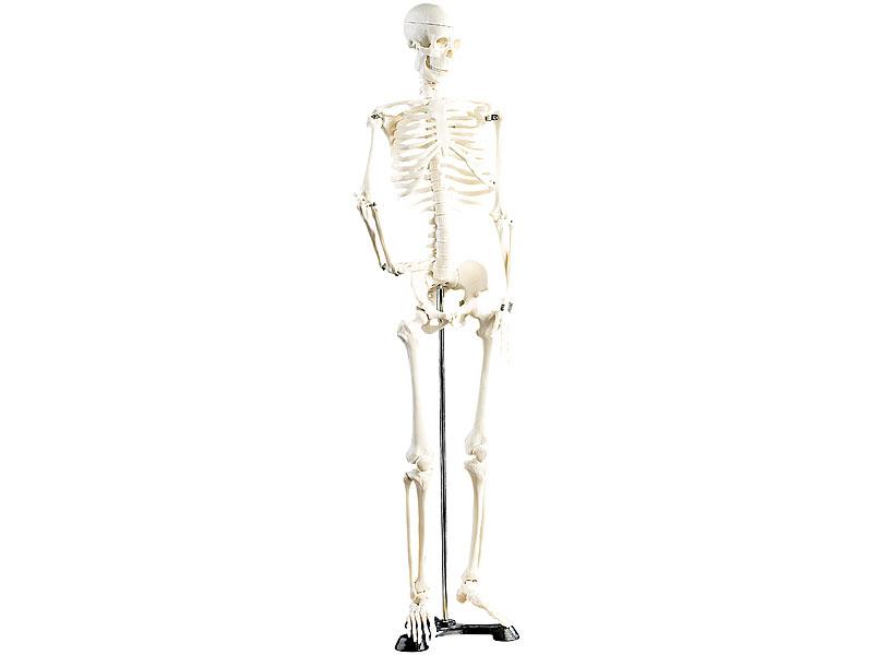 newgen medicals Original Lehrmittel Anatomie Skelett auf Ständer, 85 cm